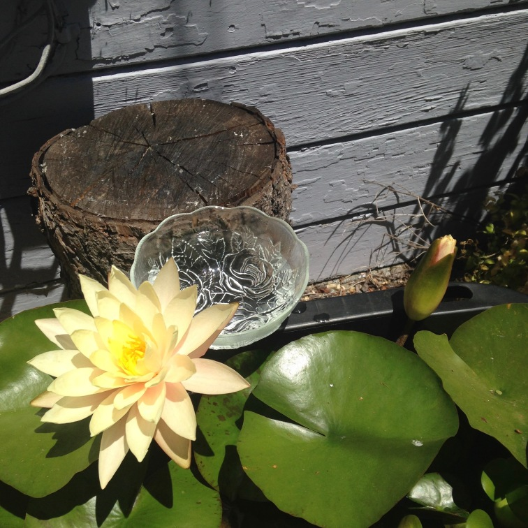Water Lily Essence being made