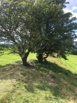 #journeytoTara#hilloftara#fairytrees#makeawish